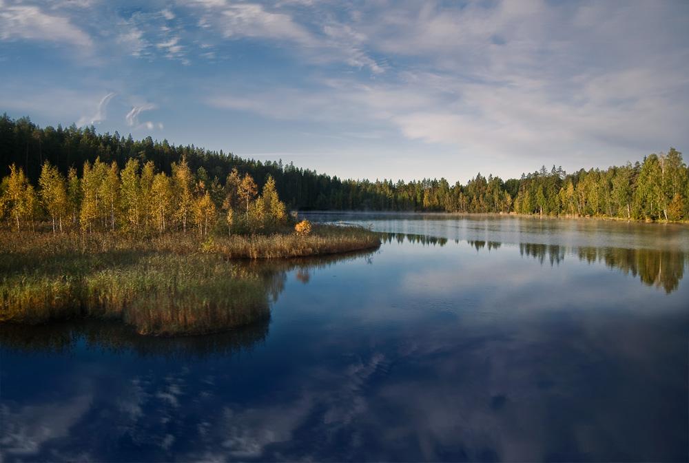 """фото """"Осеннее настроение"""" метки: пейзаж, лес, осень"""