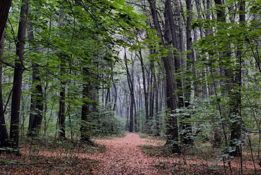 """фото """"Уже не летнее утро"""" метки: пейзаж, лес"""