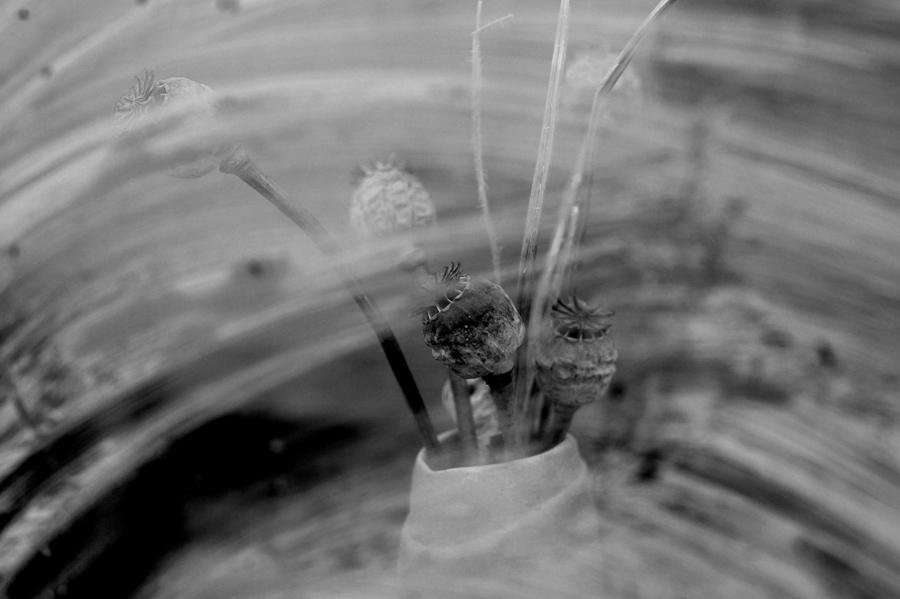 "photo ""Vase with a poppy"" tags: still life,"