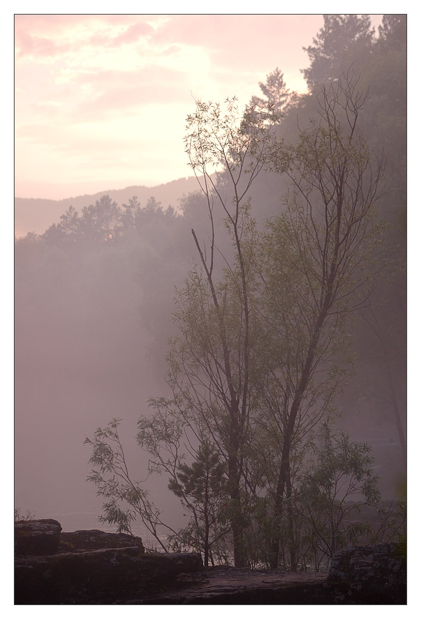 "photo ""Cobweb morning"" tags: ,"