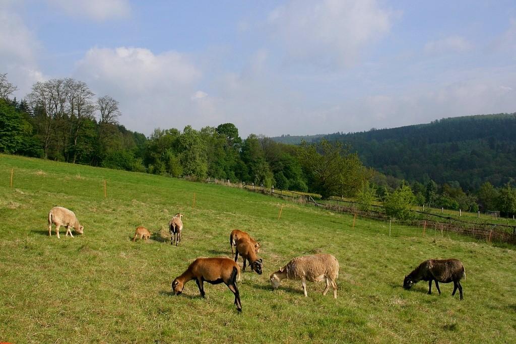 """фото """"пастораль"""" метки: путешествия, природа, Европа, домашние животные"""