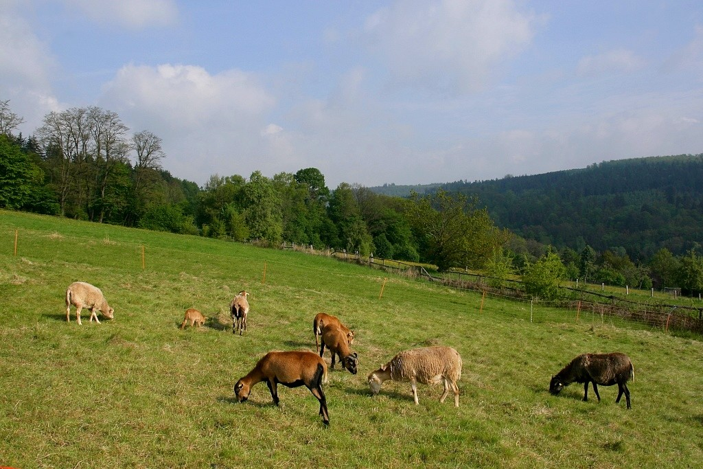 "photo ""***"" tags: travel, nature, Europe, pets/farm animals"