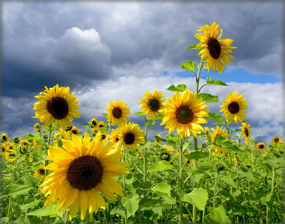 """фото """"Созвездие"""" метки: пейзаж, природа, цветы"""