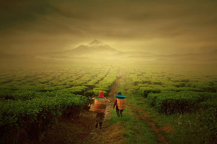 "photo ""tea farmer"" tags: landscape, mountains"