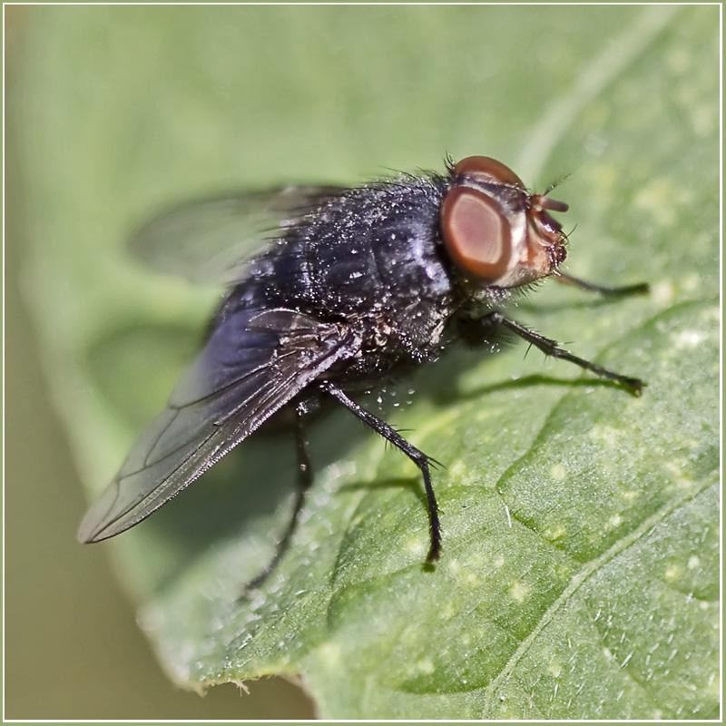 """фото """"Циномия-2"""" метки: природа, макро и крупный план, насекомое"""