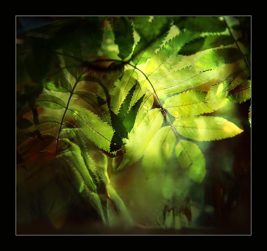 """фото """"Осень на пороге"""" метки: природа, абстракция,"""