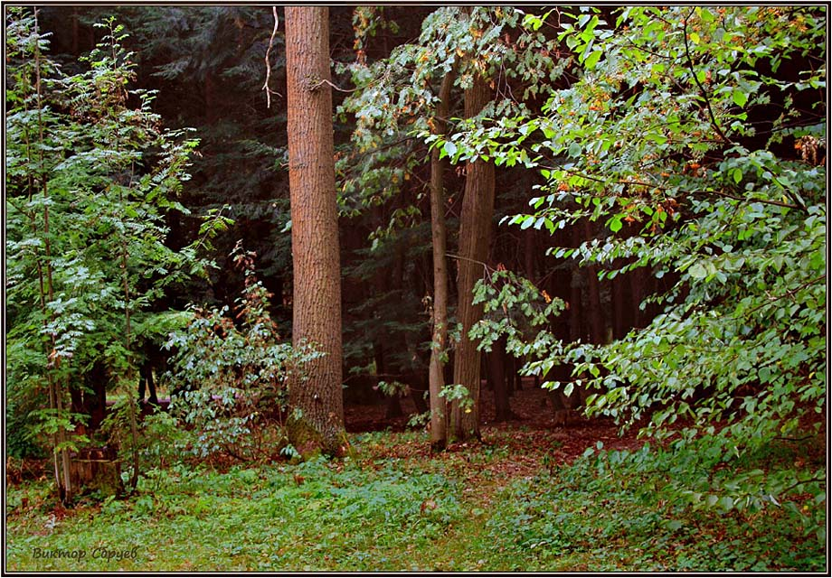 """photo """"***"""" tags: landscape, forest, summer"""