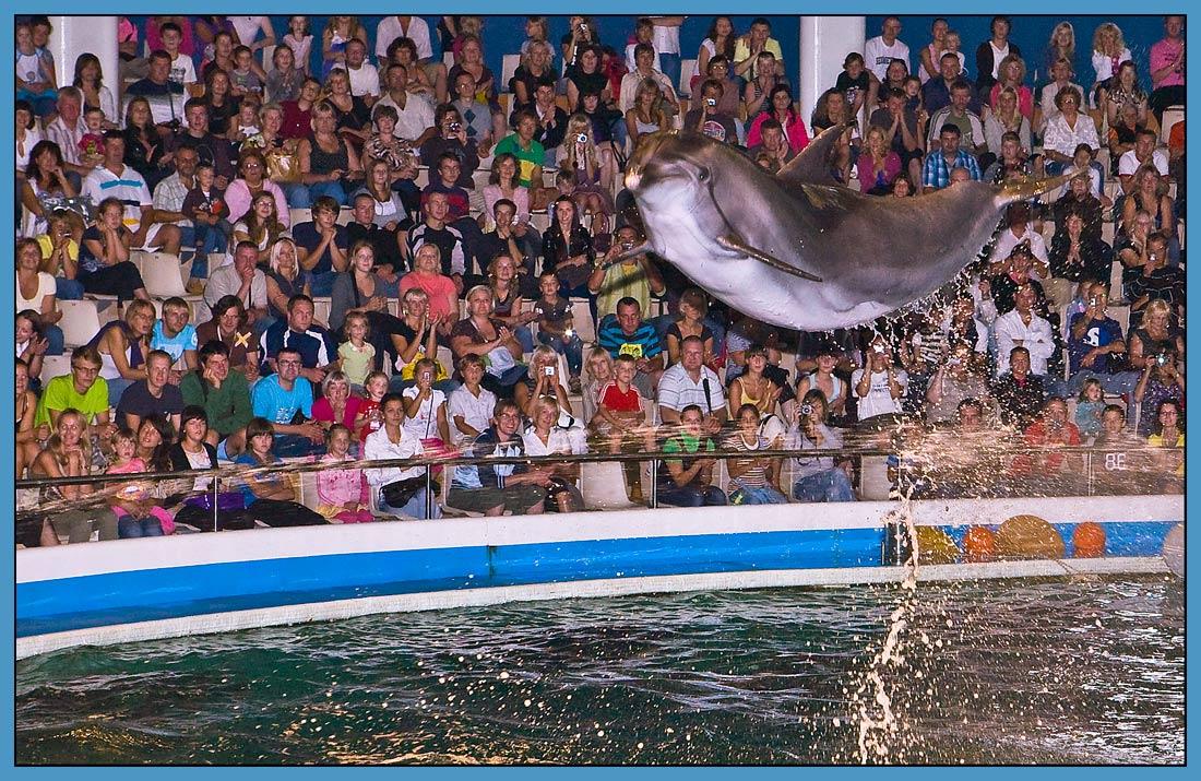"""фото """"В дельфинарии"""" метки: репортаж, природа, дикие животные"""