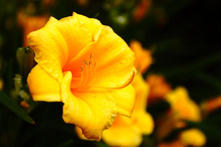 """фото """"Welcome!"""" метки: природа, макро и крупный план, цветы"""