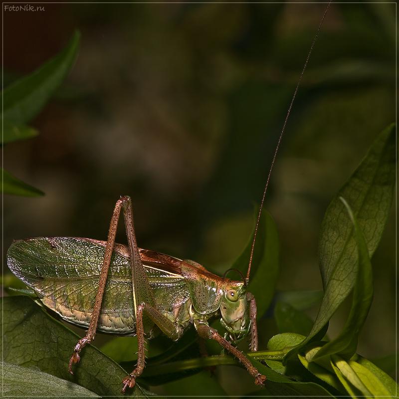 """фото """"5211"""" метки: природа, разное, насекомое"""