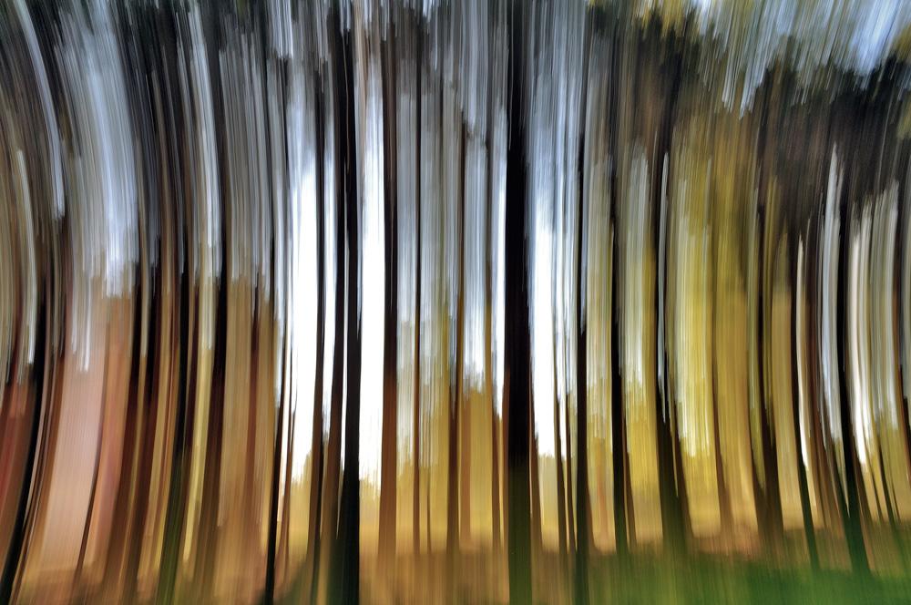 """фото """"Волшебное пробуждение леса....."""" метки: пейзаж, абстракция, лес"""