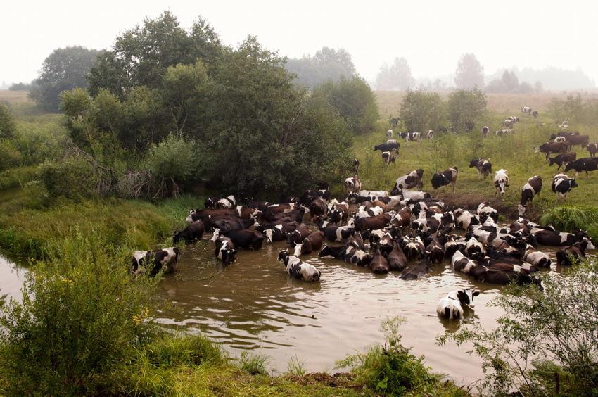 """фото """"Купальщицы (2010)"""" метки: природа, домашние животные"""