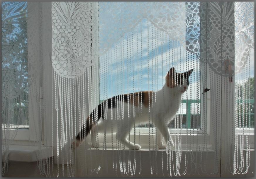 """фото """"...просто бабочка залетела в окно."""" метки: природа, домашние животные"""