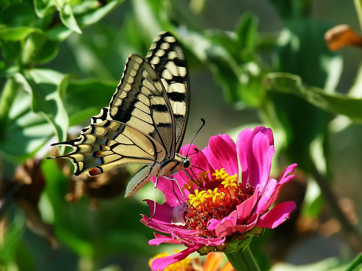 """фото """"Let`s summer"""" метки: природа, насекомое"""