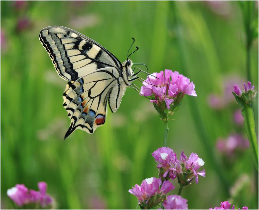 """фото """"Schmetterling"""" метки: макро и крупный план,"""