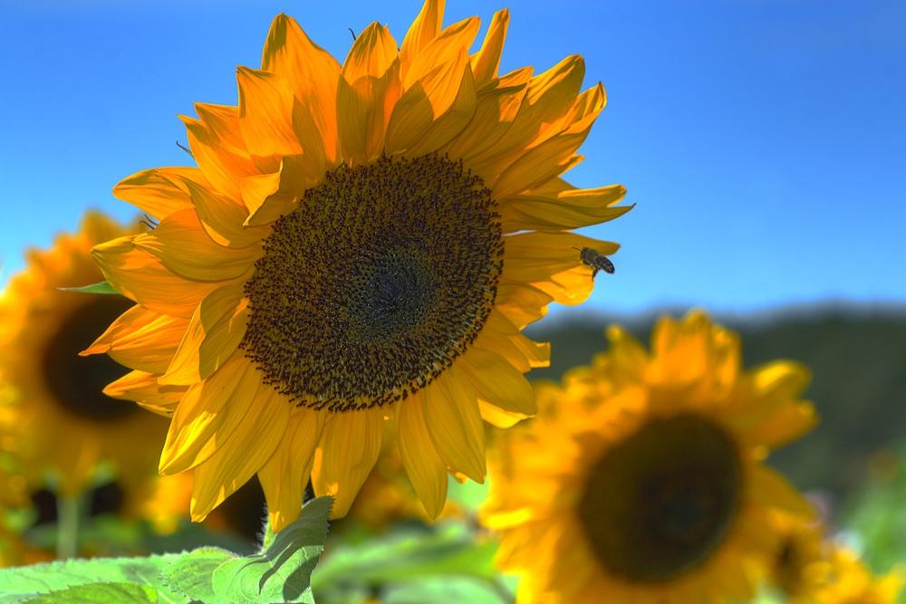 """фото """"***"""" метки: природа, пейзаж, лето, цветы"""