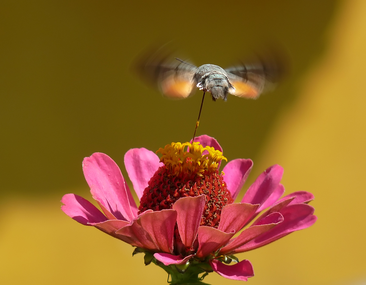 "фото ""Refuelling"" метки: природа, насекомое"