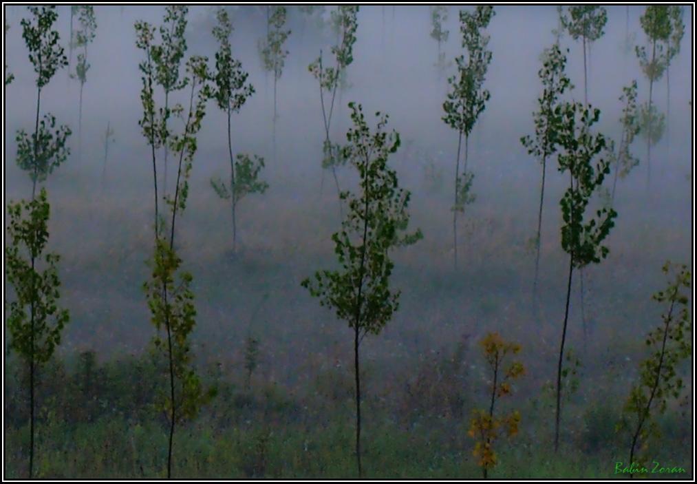 """фото """"FOG II"""" метки: пейзаж,"""