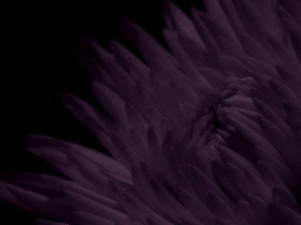 """фото """"whenever wherever whatever"""" метки: природа,"""