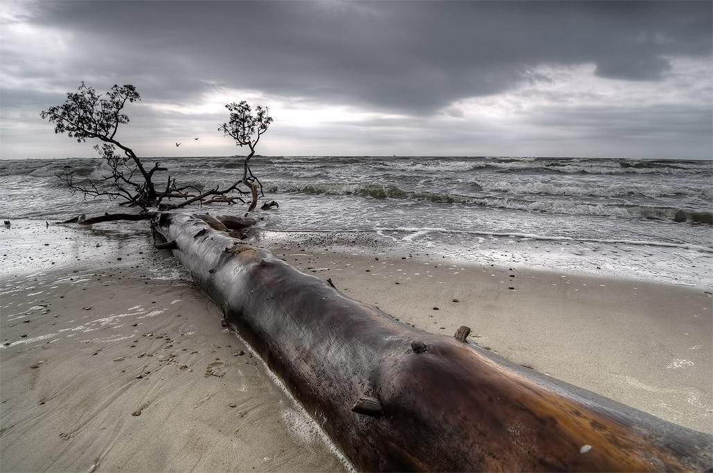 """фото """"Унесённый волнами"""" метки: пейзаж, вода"""