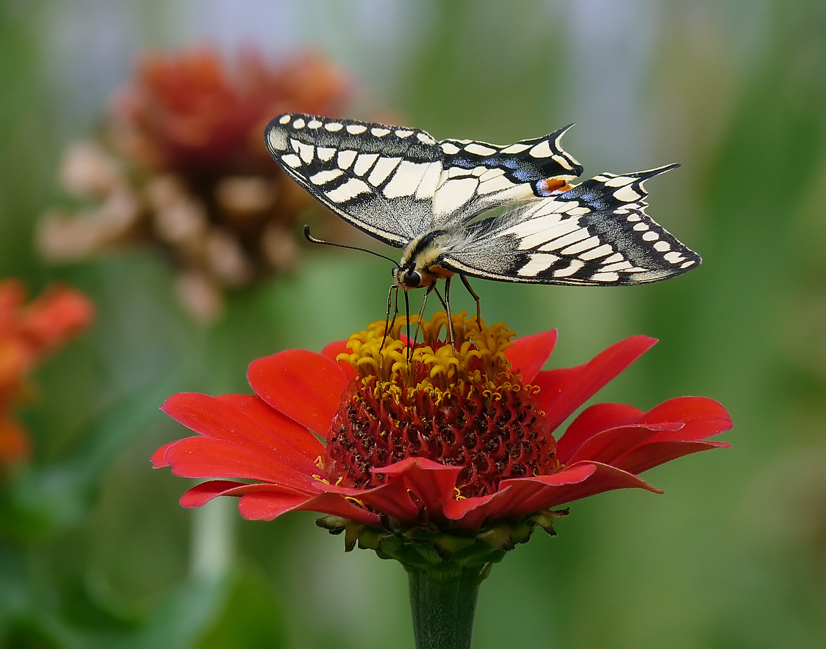 """фото """"Цвета Болгарии - белый, зеленый, красный"""" метки: природа, насекомое"""