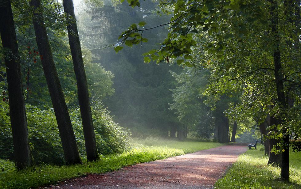 "фото ""После дождя. Ораниенбаум."" метки: пейзаж, лес, лето"