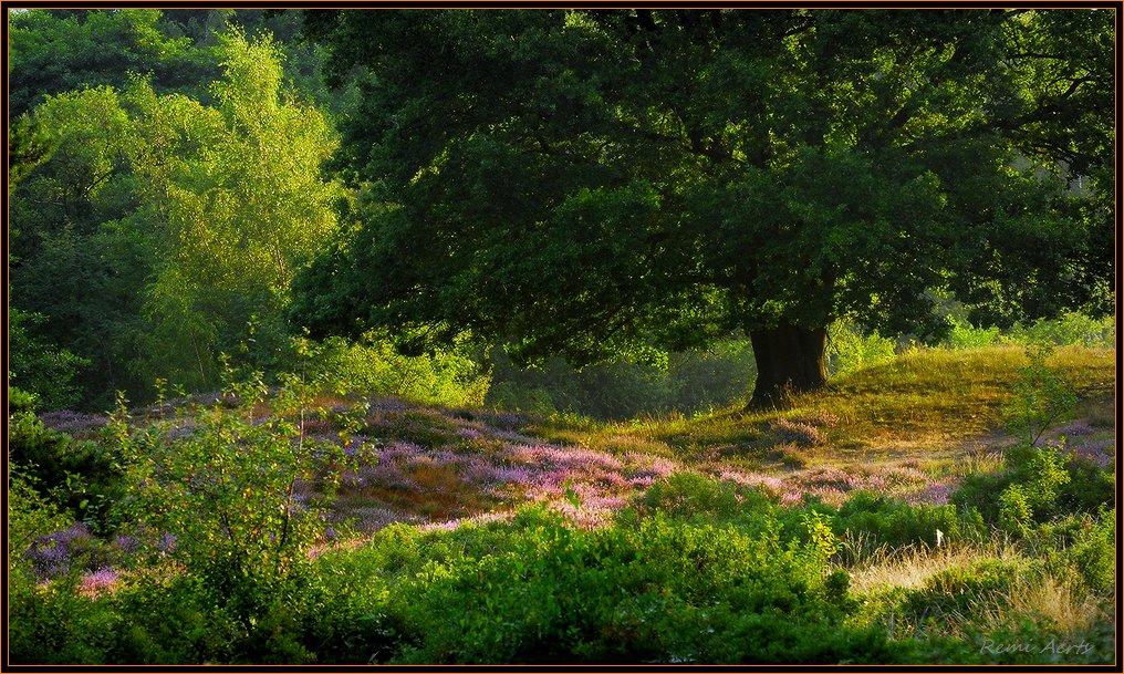 """фото """"***"""" метки: пейзаж, природа, лето, цветы"""