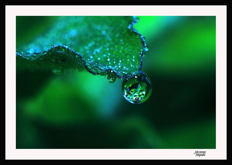 """фото """"tear of nature"""" метки: макро и крупный план, природа, цветы"""