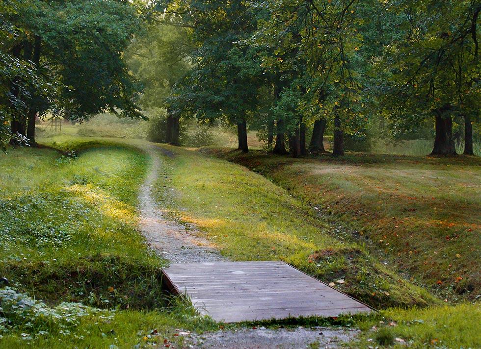 "фото ""Заветная тропинка."" метки: пейзаж, лес, лето"