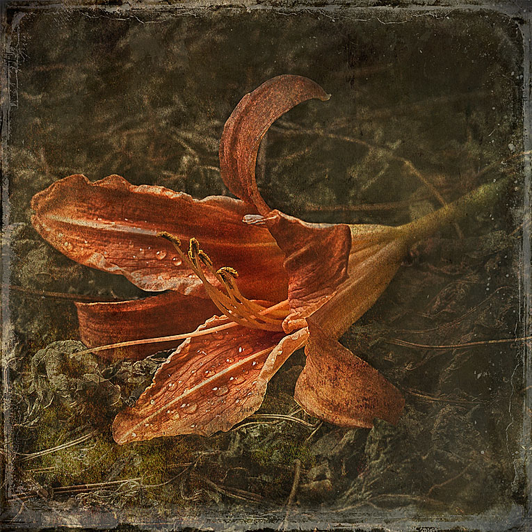 """фото """"Лилия"""" метки: натюрморт,"""
