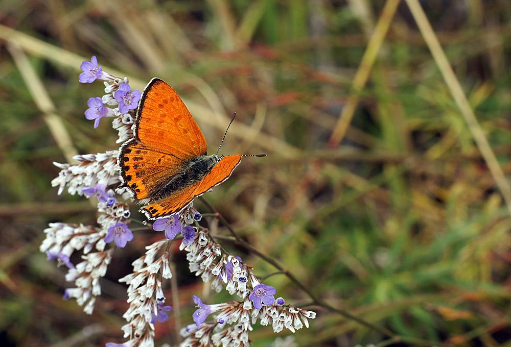 """фото """"Лето"""" метки: макро и крупный план, природа, насекомое"""