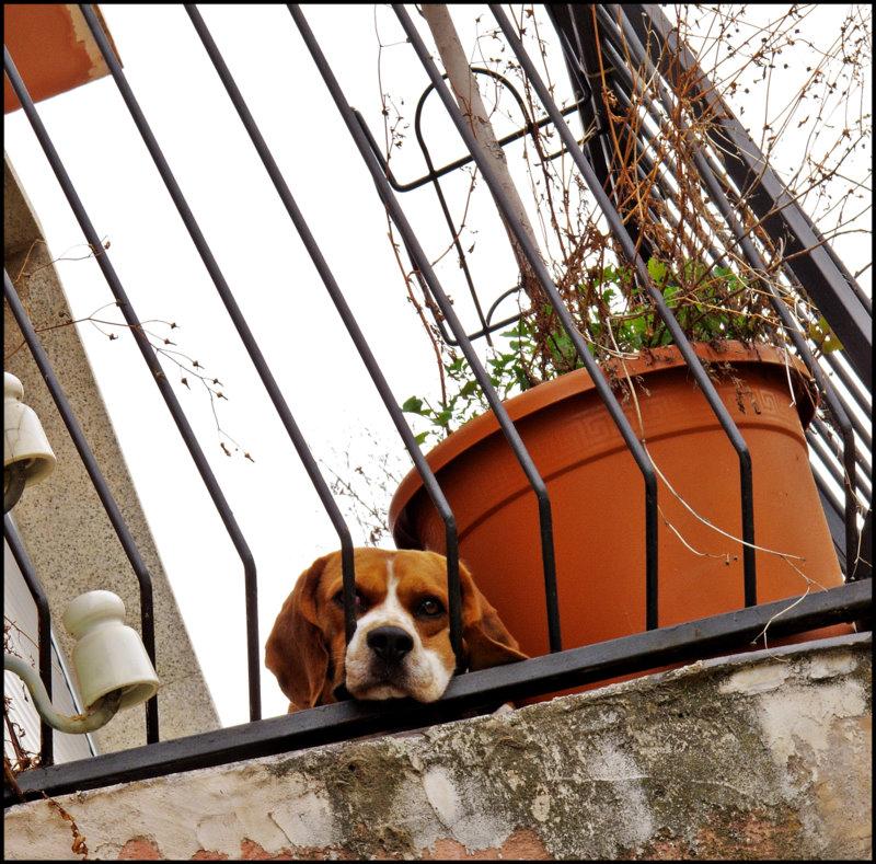 """фото """"CITY"""" метки: природа, город, домашние животные"""