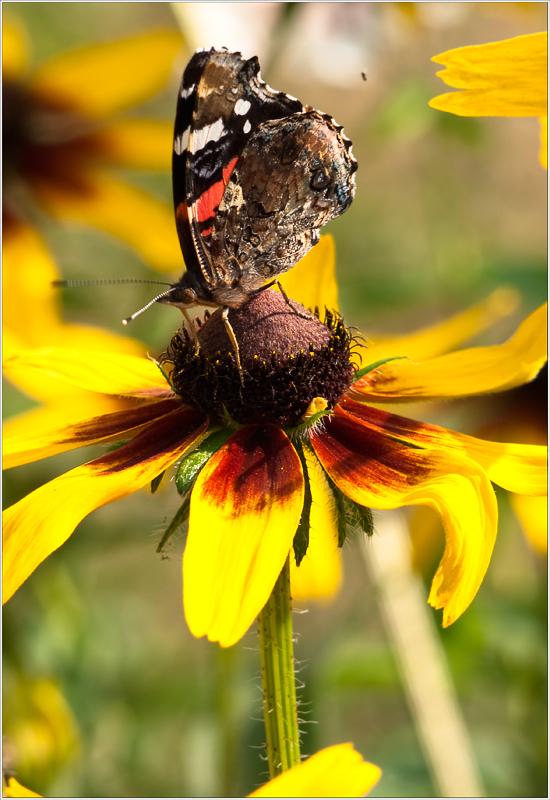 """фото """"На взлетной площадке"""" метки: природа, насекомое"""