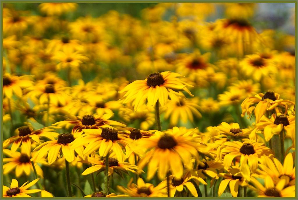 """фото """"Лето"""" метки: природа, путешествия, Европа, цветы"""