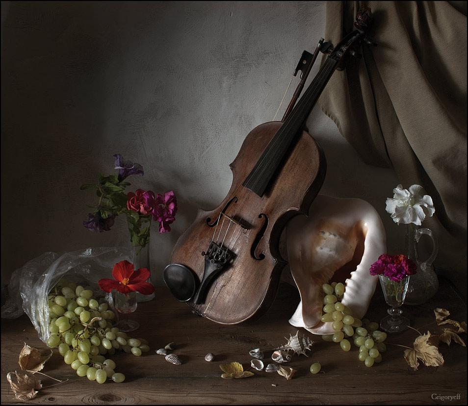 """фото """"Скрипка и раковина"""" метки: натюрморт,"""