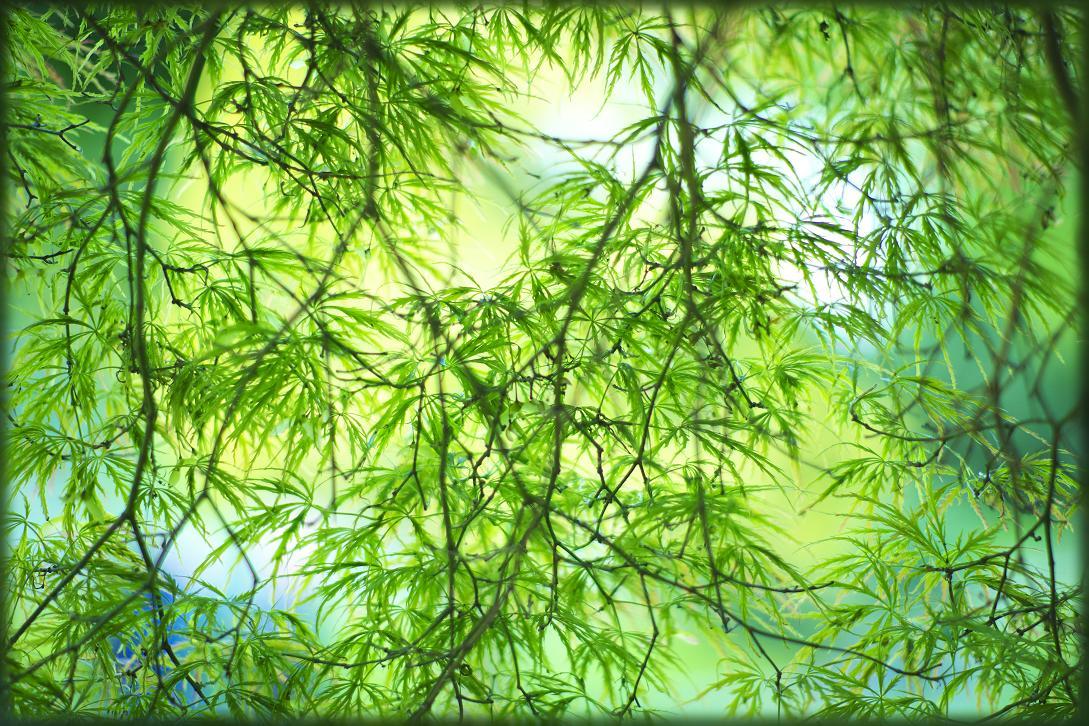 "фото ""the external world"" метки: природа, цветы"
