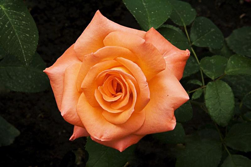 """фото """"Цветочная 93."""" метки: природа, цветы"""
