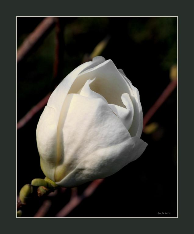 """фото """"() Альба 2"""" метки: природа, цветы"""