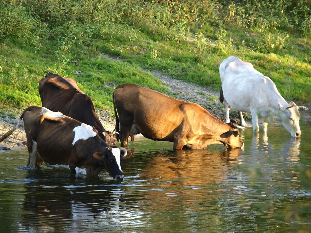 """фото """"На водопой"""" метки: природа, домашние животные"""