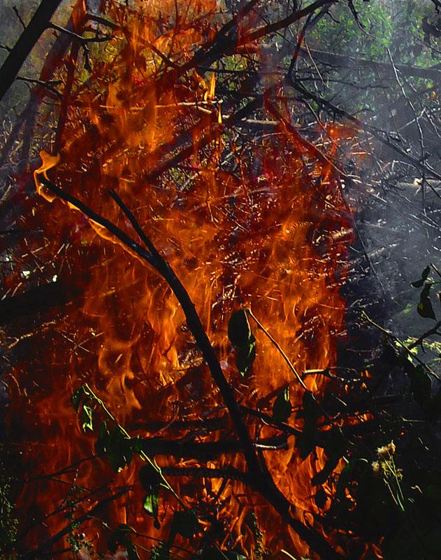 """фото """"Стихия огня"""" метки: ,"""