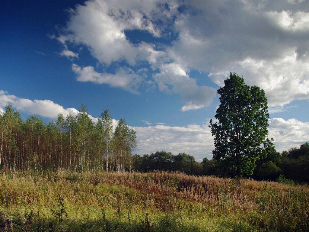 """фото """"Осенний вечер"""" метки: пейзаж, осень"""