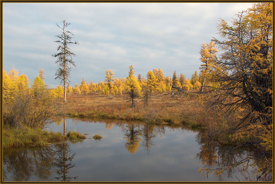 "фото ""Осень в Приполярье"" метки: пейзаж, лес, осень"
