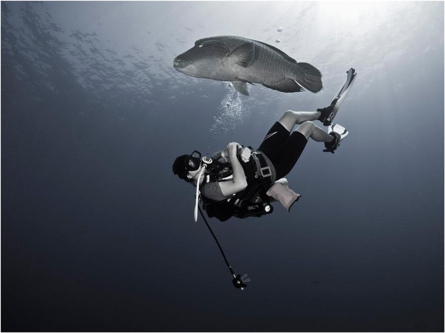 """фото """"Взаимный интерес"""" метки: подводные, природа, дикие животные"""