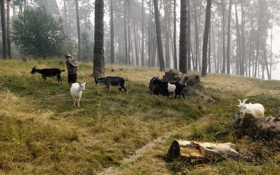 """фото """"Козьими тропами (2010)"""" метки: жанр,"""