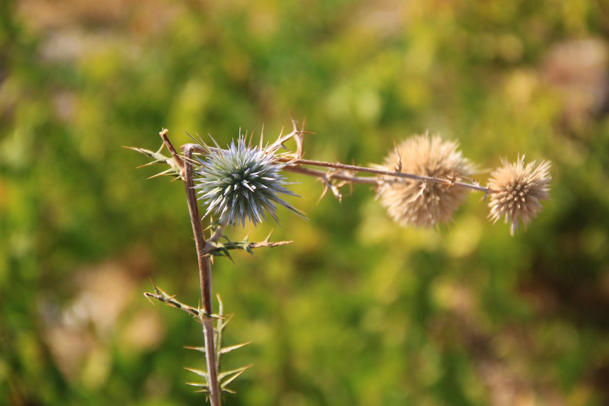 """фото """"Broken?"""" метки: природа, цветы"""