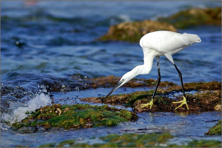 """фото """"Охота"""" метки: природа, дикие животные"""