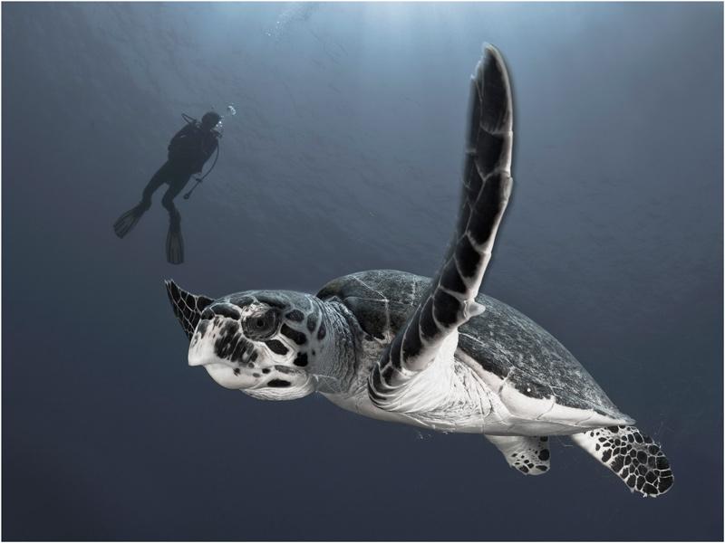 """фото """"Наблюдатель"""" метки: подводные, природа, дикие животные"""
