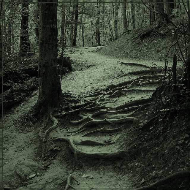 "фото ""Извивы на пути"" метки: пейзаж, природа, лес"