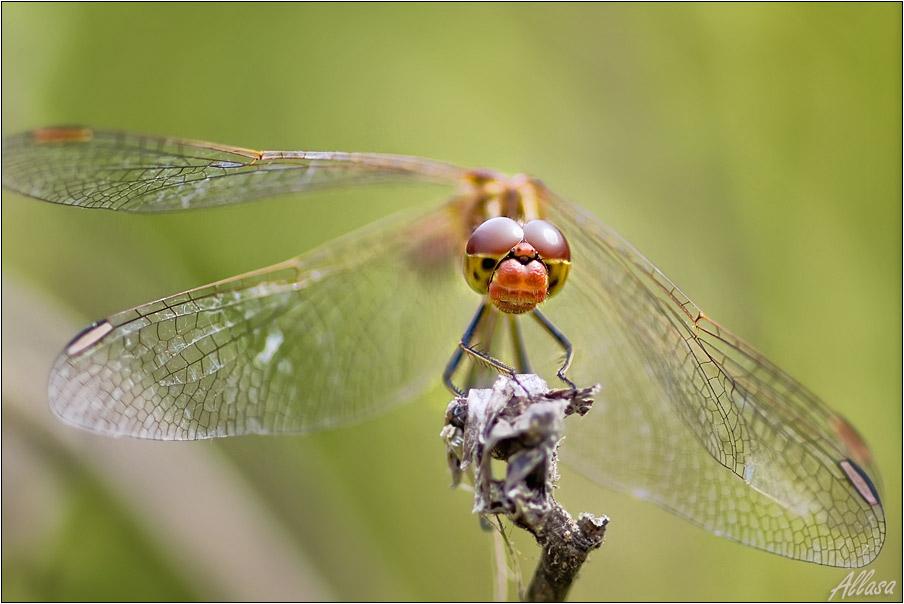 """фото """"Ты пропела лето, что с тобой будет осенью?...."""" метки: природа, насекомое"""