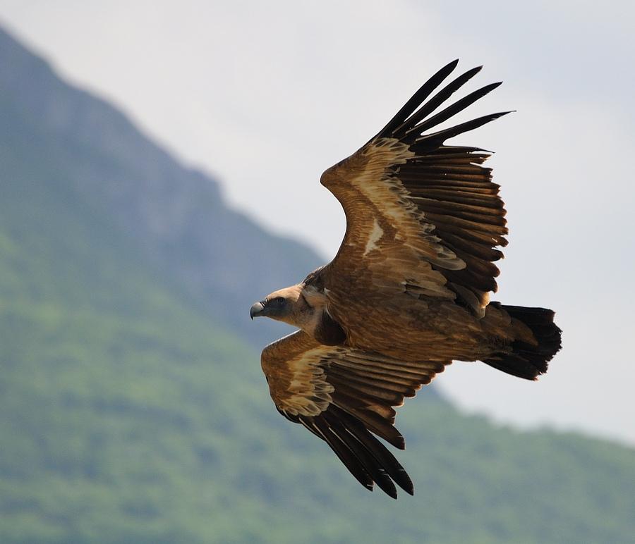 """фото """"Полёт"""" метки: природа, домашние животные"""